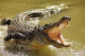 Running Croc